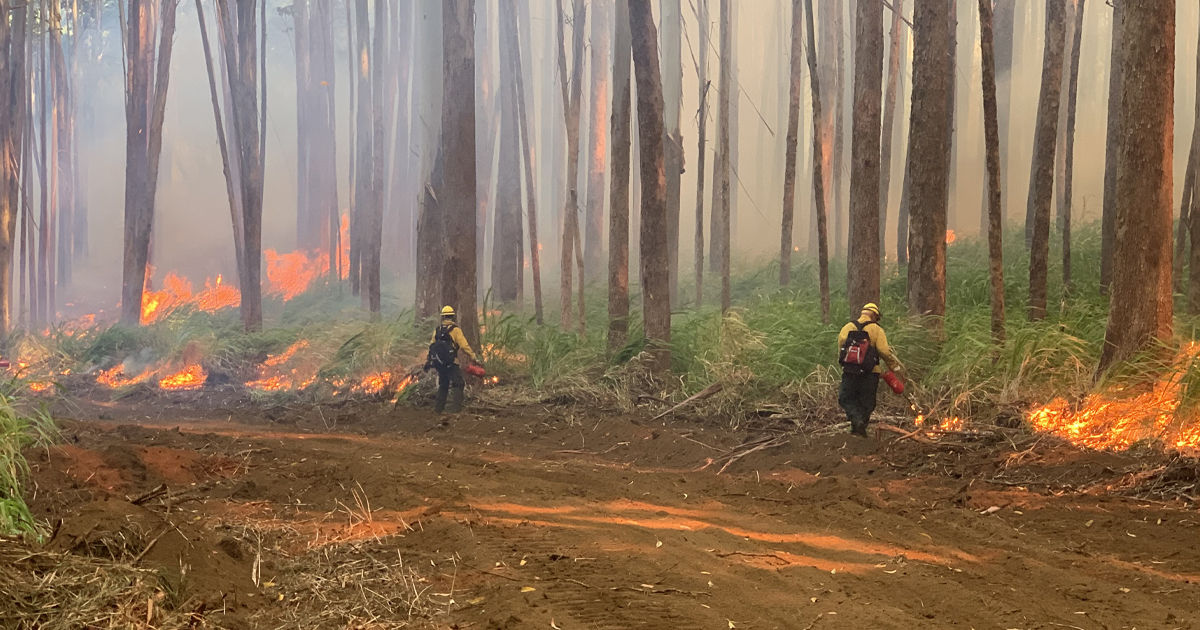 Paʻauilo Fire Highlights Wildfire Risks as Hawaiʻi Faces a Particularly Dry Year Ahead