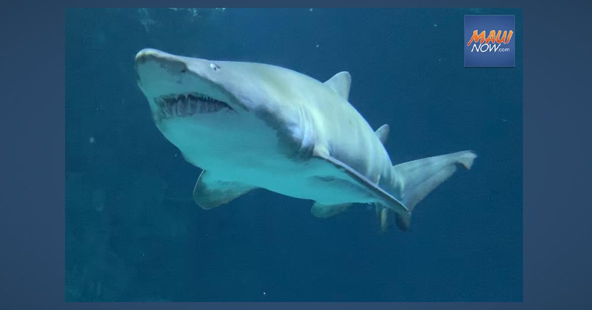 US Senate Approves Ban on Sale of Shark Fins as Hawaiʻi Enacts Shark Protection Act