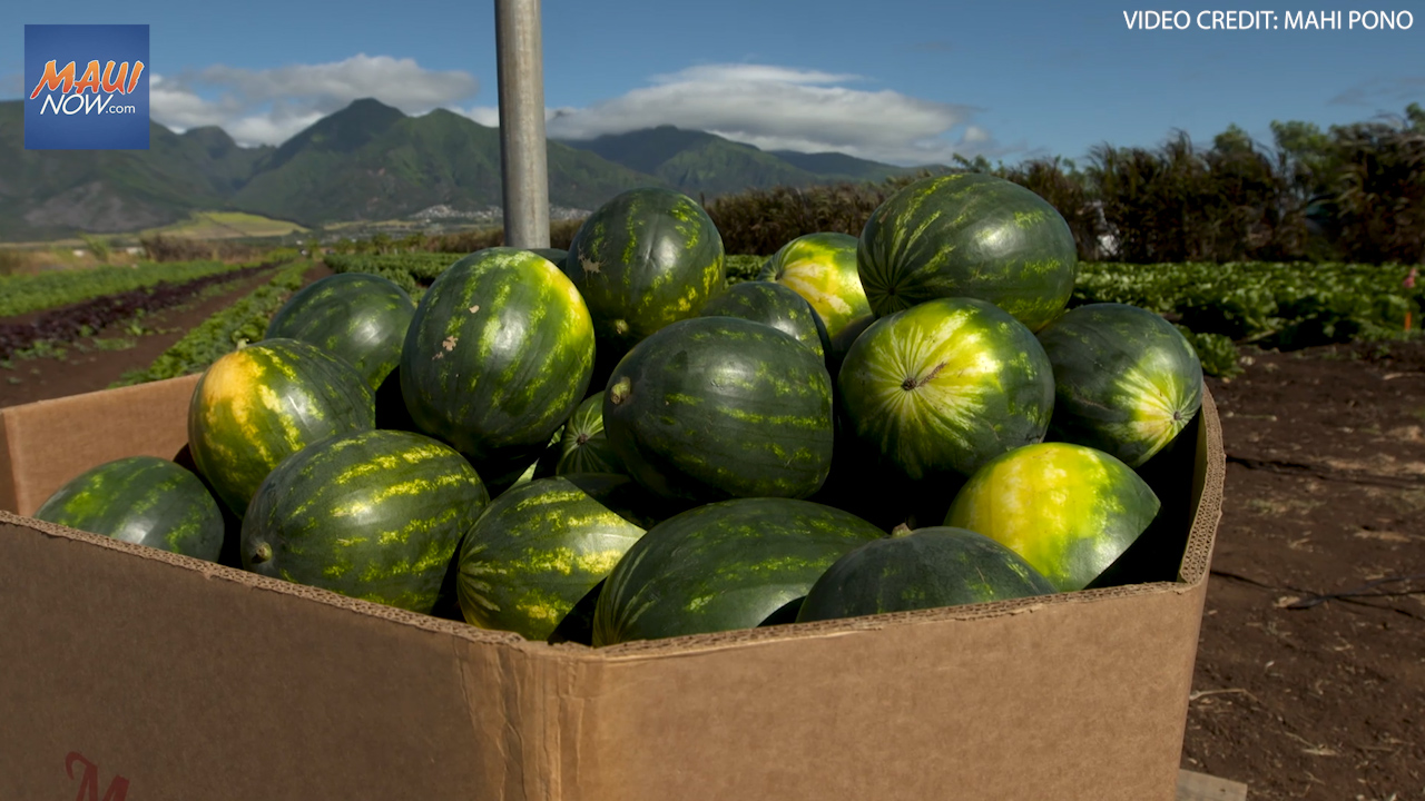 First Mahi Pono Watermelon Harvest To Benefit Imua Family Services