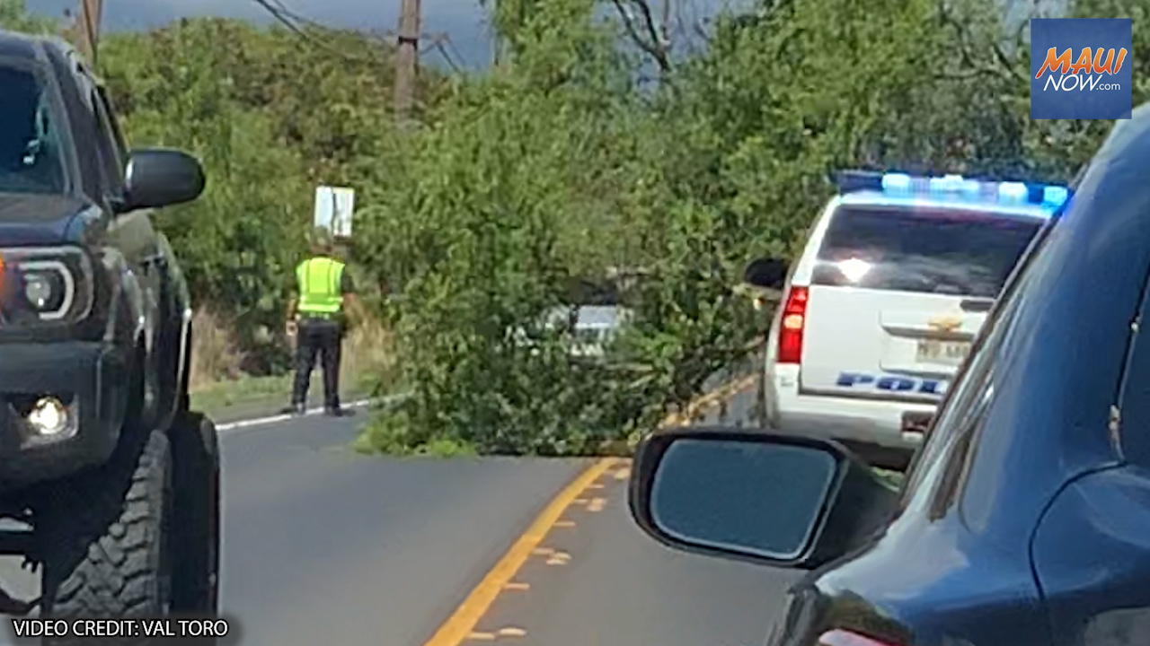 Traffic Advisory: Downed Tree on Hāna Highway in Pāʻia