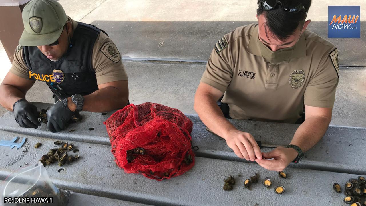 Man Cited For Harvesting 345 Undersized 'Opihi on Hawai'i Island