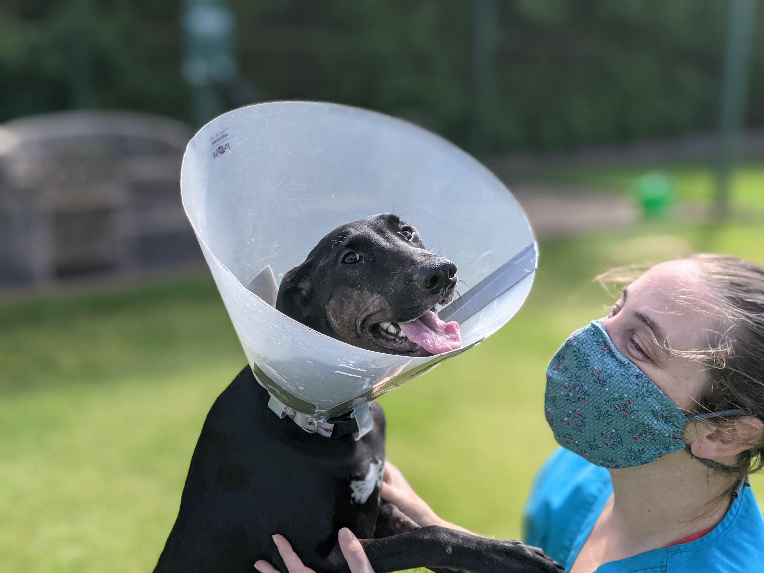 Dog Hit By Car And Shot Is Inspiration at Maui Humane Society