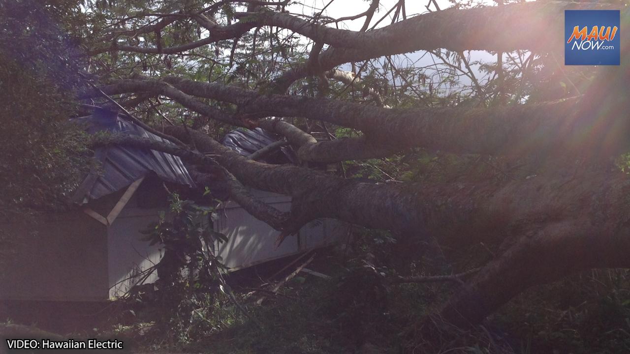 Hawaiian Electric Shares Storm Prep and Tree Maintenance Tips