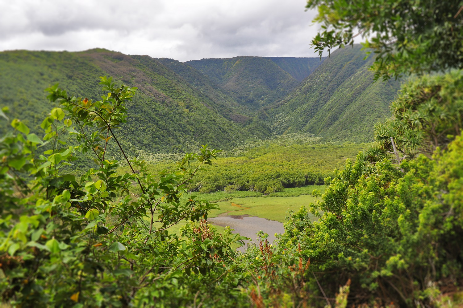 Program Established to Mitigate Visitor Impacts at Pololū Valley on Hawaiʻi Island