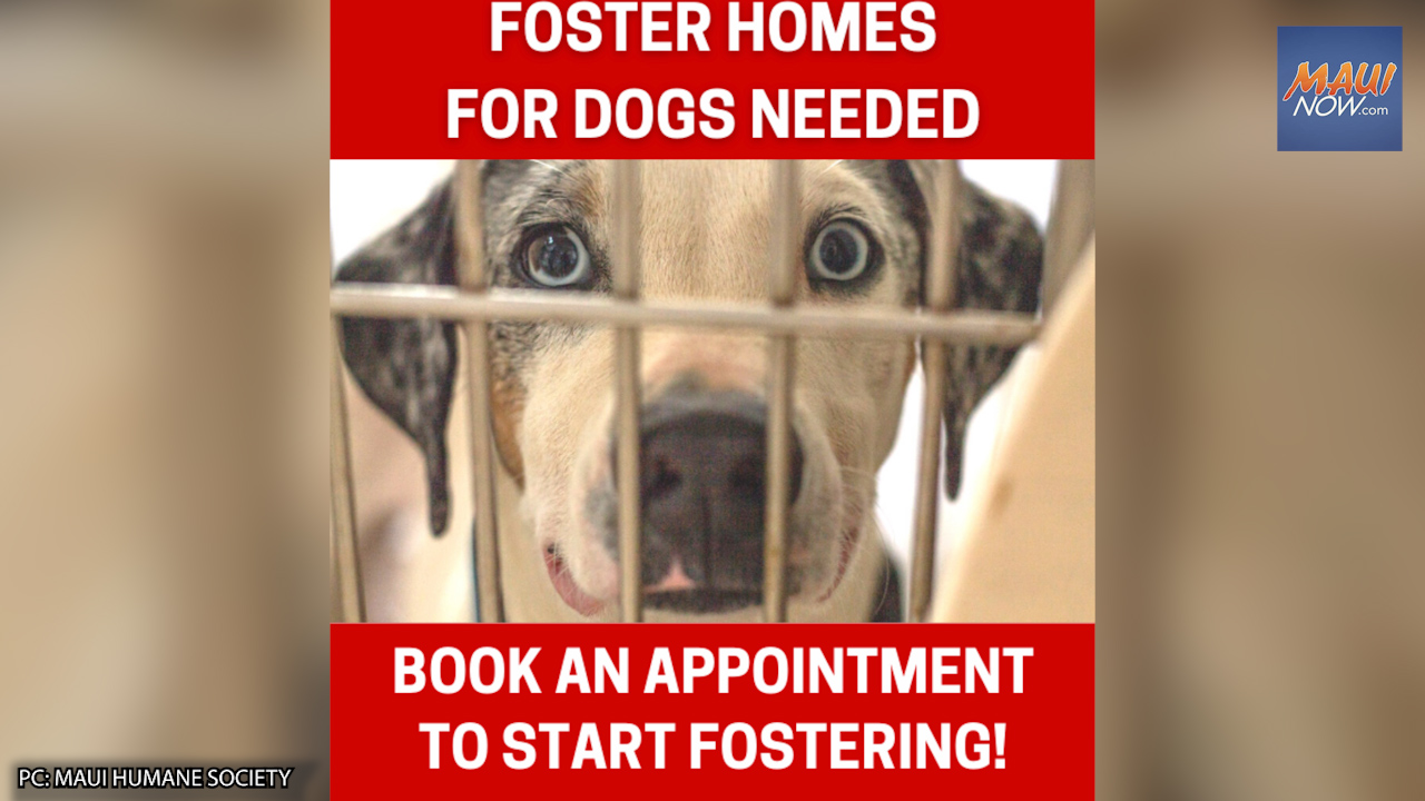 Maui Humane Society Issues Urgent Request for Foster Homes for Dogs