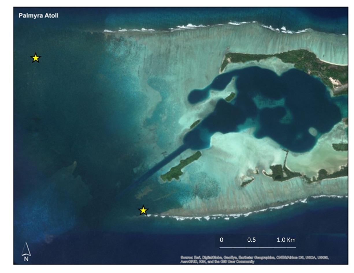 Insidious Coral Killer Invading Palmyra Atoll Reef