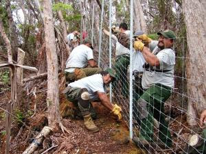 UH Hilo Research Finds Rapid ʻŌhiʻa Death Linked to Hoofed Animals