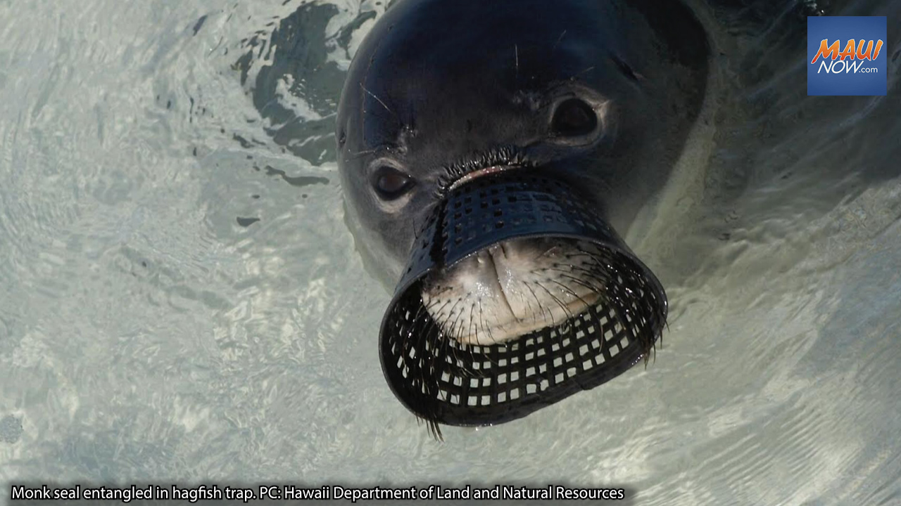 Surfrider Project Aims to Reduce Plastic Pollution, Protect Hawaiian Monk Seals