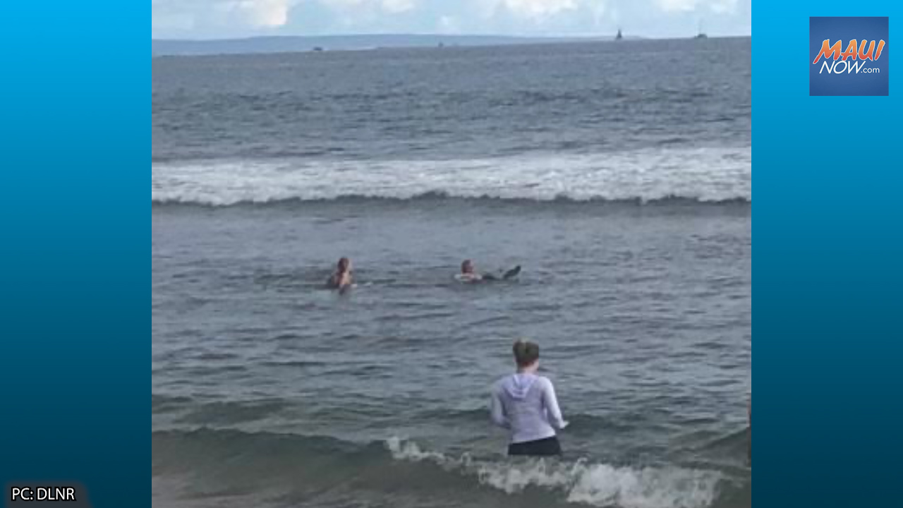 Visitor to Maui Cited for Lifting Turtle Out of Water