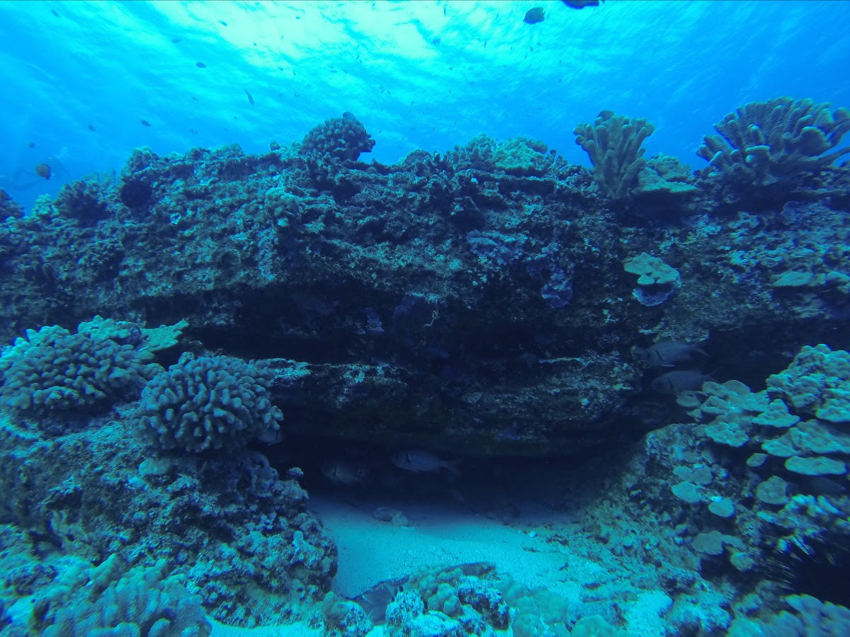 Palau's Efforts for Responsible Tourism Featured during Maui Zoom Event Sept. 1