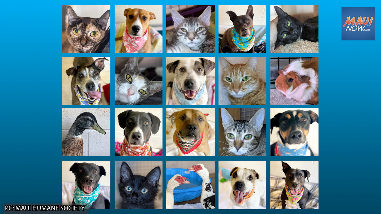 Maui Humane Society Hosts First Public Adoption Event in 18+ Months on Sept. 18