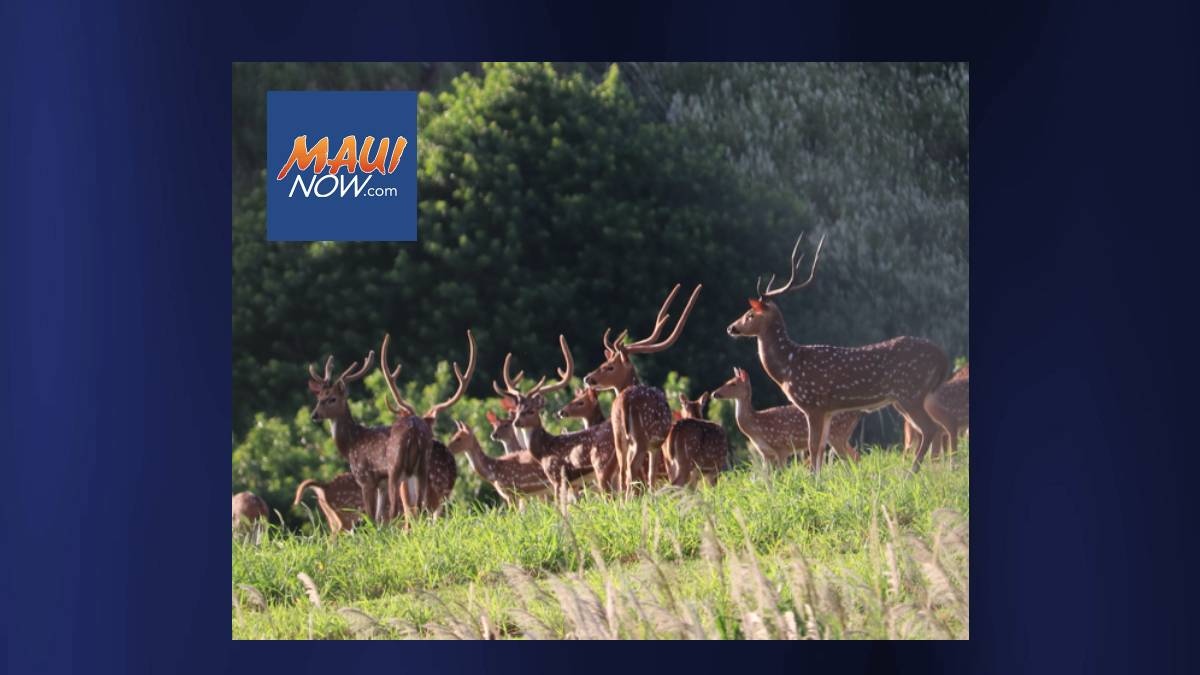 Maui Nui Venison Receives Global Nonprofit Funding To Accelerate Sustainable Food