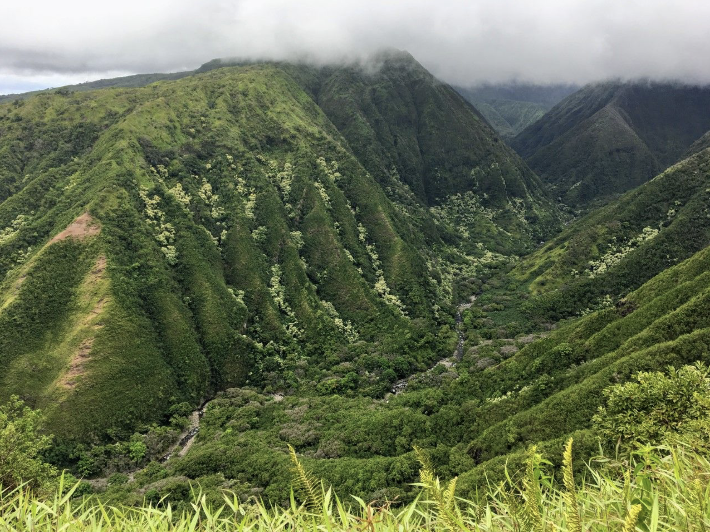 Hawai'i Joins Worldwide Pledge to Conserve, Restore, or Grow 100 Million Trees by 2030