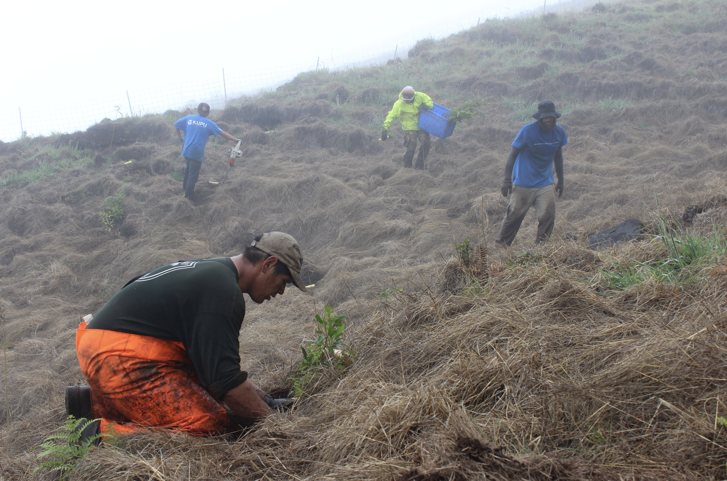 $5 M Earmarked for Hawai'i to Combat Climate Change, Restore Forests, Support Endangered Species