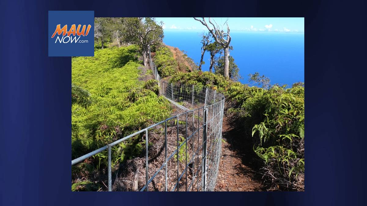 US Department of Defense Helping to Protect Endangered Seabirds on Kauaʻi