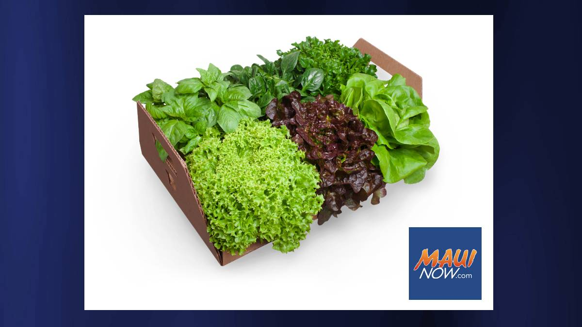 Maui Greens Launches New Line of 'Harvest at Home' Living Greens