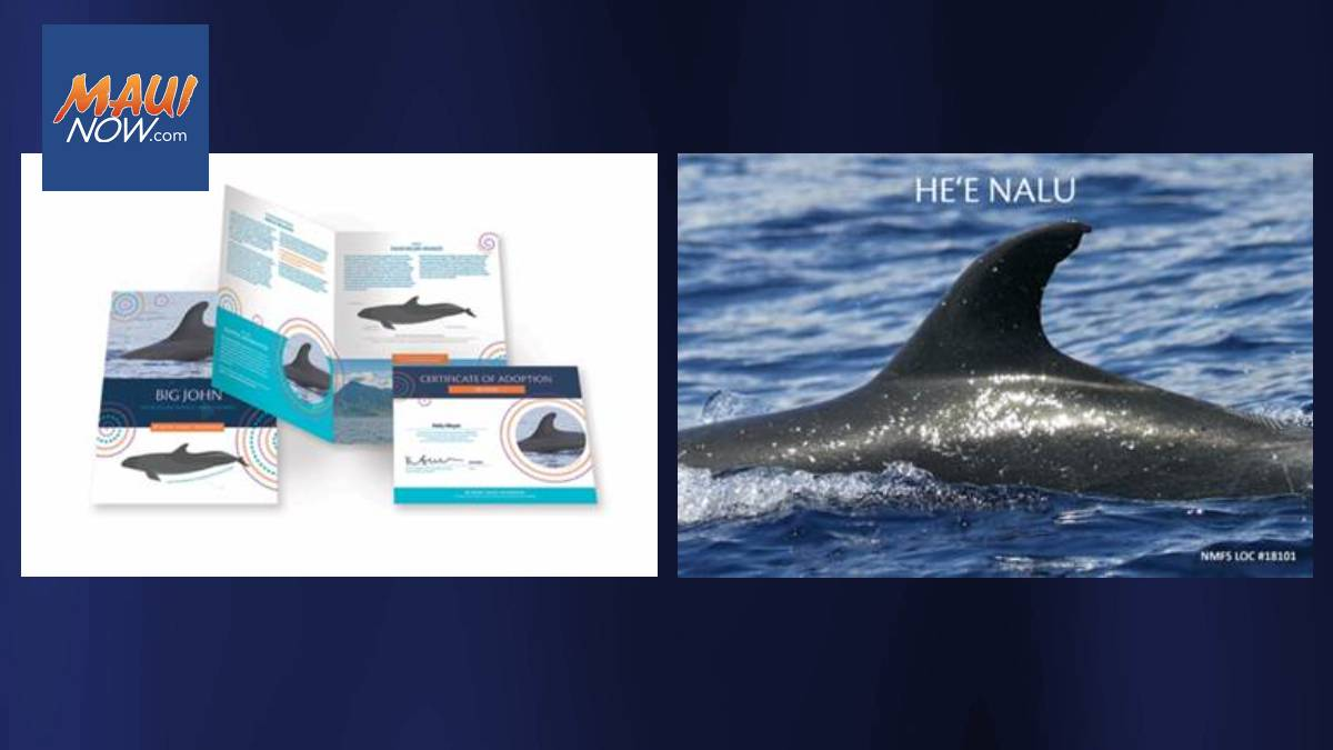 Adopt a Humpback Whale or Bottlenose Dolphin To  Fund Research & Conservation