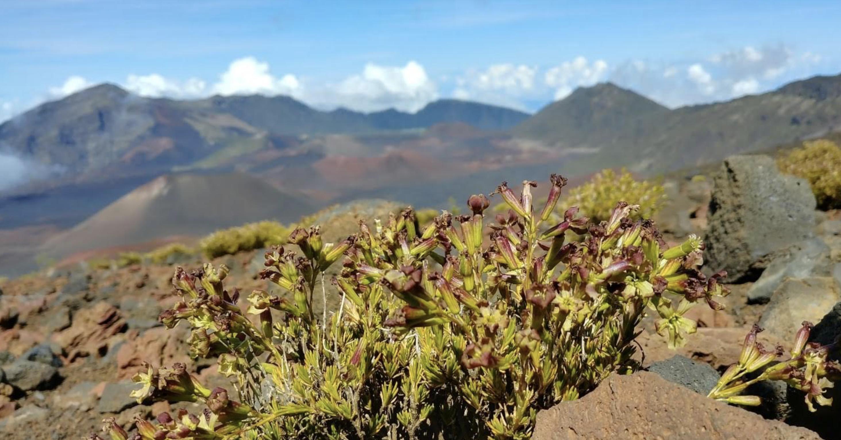 Distance Learning for Hawaiian Immersion Schools is on the Horizon at Haleakalā