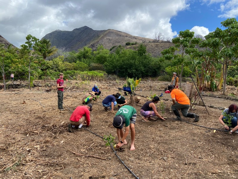 ReTree Hawaiʻi Hosting Statewide Tree Planting Campaign in November